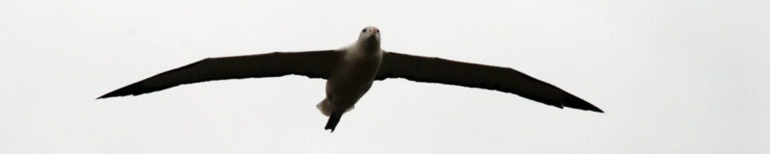 Will We See Hobbits